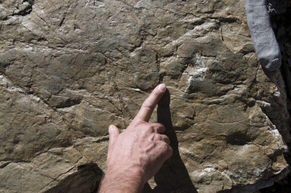 Les empreintes de dinosaures du Vieux-Emousson