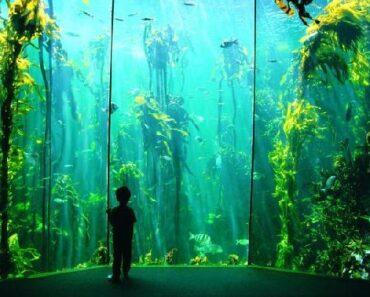 aquarium de Cape Town