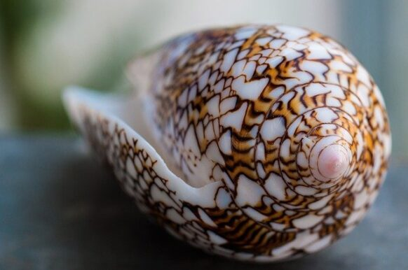 coquillage seychelles