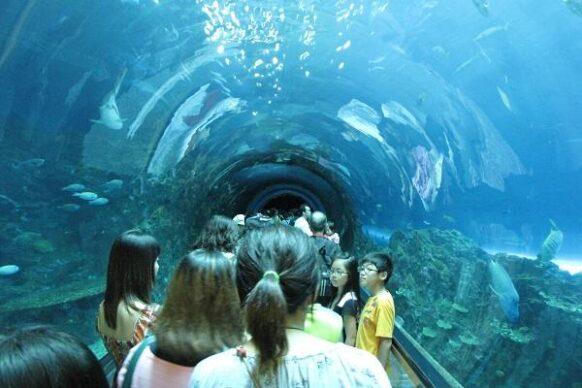Phuket-Aquarium-5