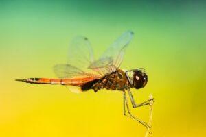 voyage moustique
