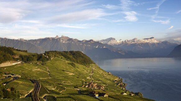 Le vignoble en terrasse en Suisse