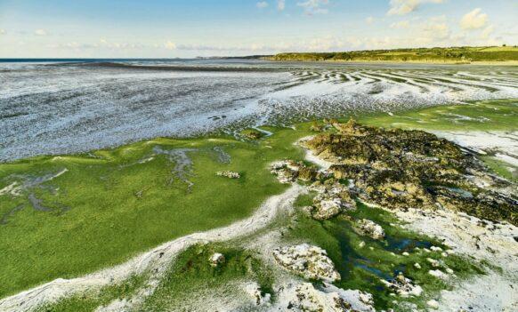 Les plages polluées aux algues vertes