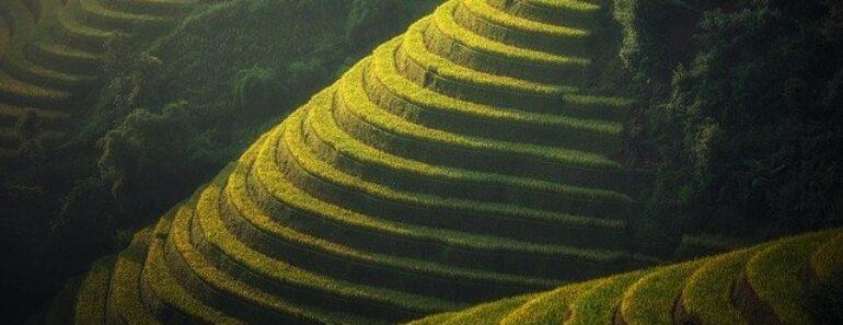 Les rizières en terrasses au Vietnam