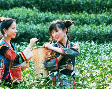 Voyager au cœur de la culture du thé en Chine