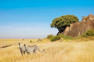 plaines sauvages de la Tanzanie